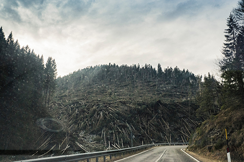 Image of a forest disaster